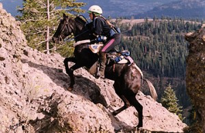 endurance-riding-tevis-cup