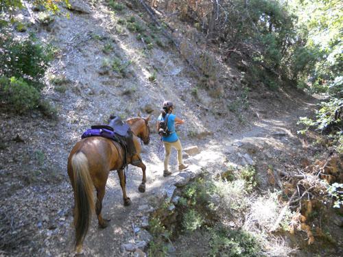 endurance-riding
